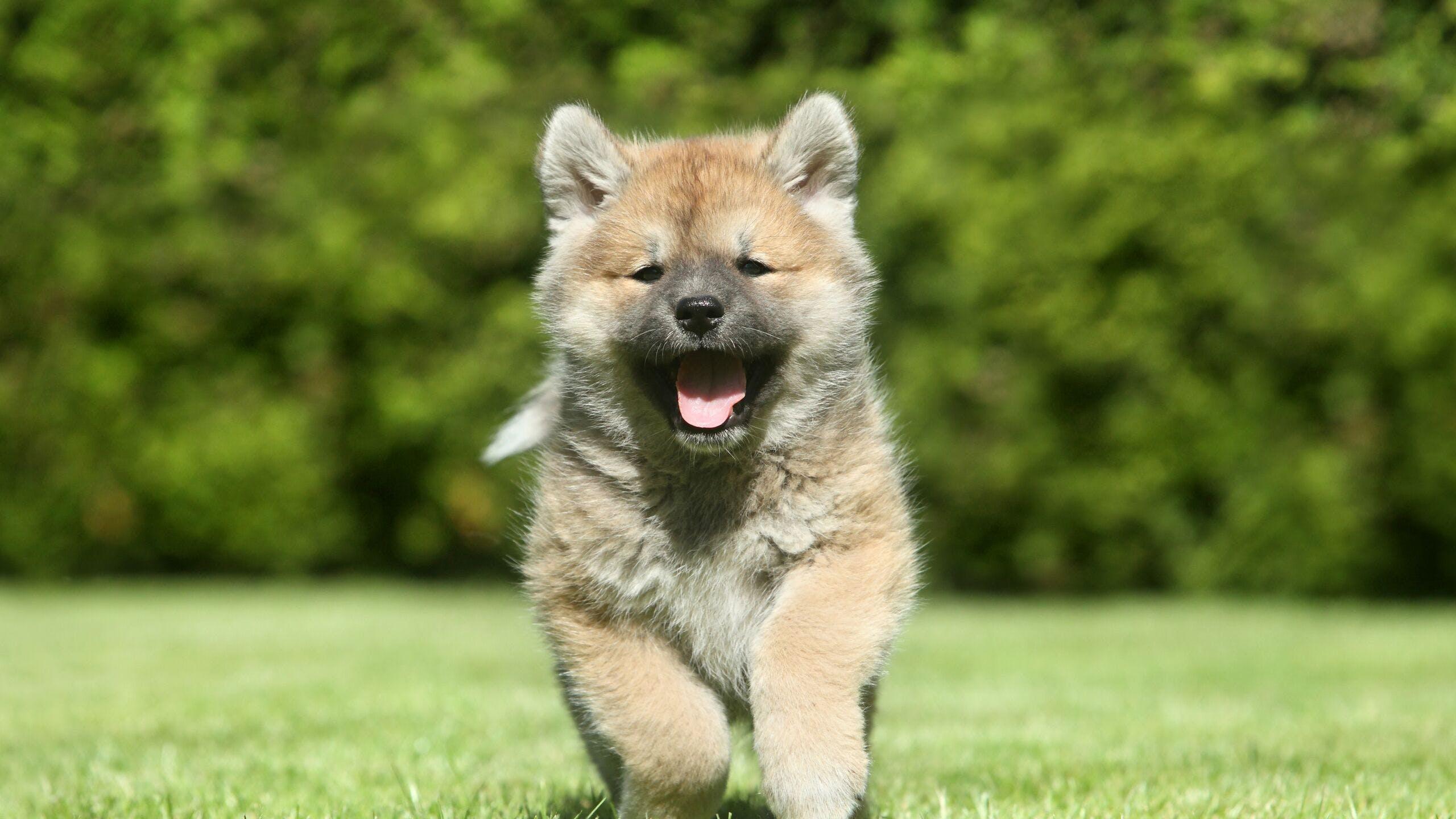 Axa luxembourg : budget santé chien